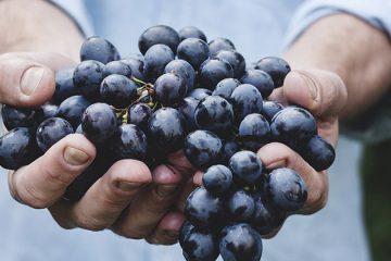Wie plukt de vruchten?
