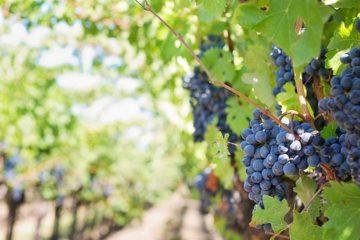 Symington koopt wijngaard buiten Douro