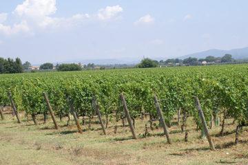 Rijke Russen investeren in wijnbouw