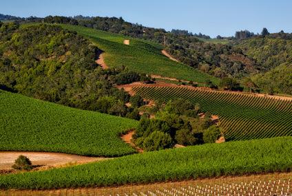 Wijngaarden Napa Valley van hand tot hand