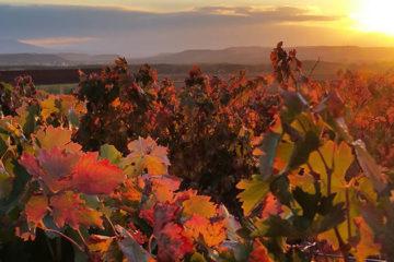Mijlpaal voor Rioja-boeren