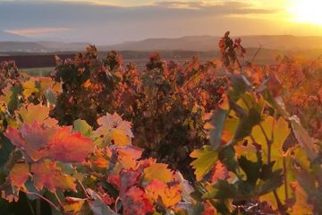 Rioja verwacht prijsstijging