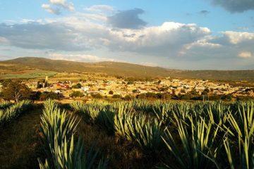 Onderzoek naar nep-tequila