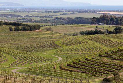Australië exporteert meer wijn