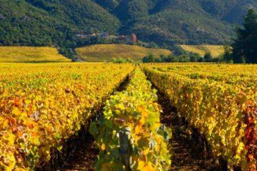 Chili spreekt van mooi wijnjaar