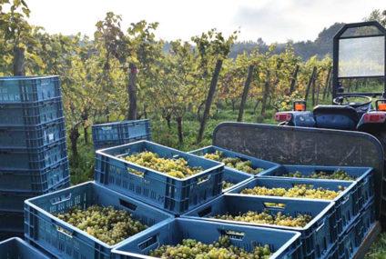 Wijngaarden zetten hun deuren wagenwijd open