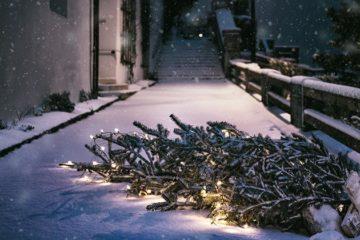 Brouwer geeft afgedankte kerstboom nieuw leven