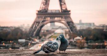 Vinexpo en Wine Paris samen verder