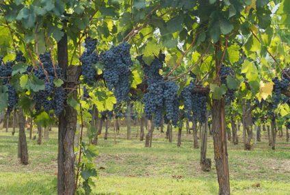 42e World congress of vine & wine