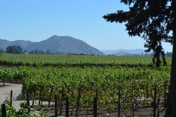 Masters of Wine steken Chili hart onder de riem