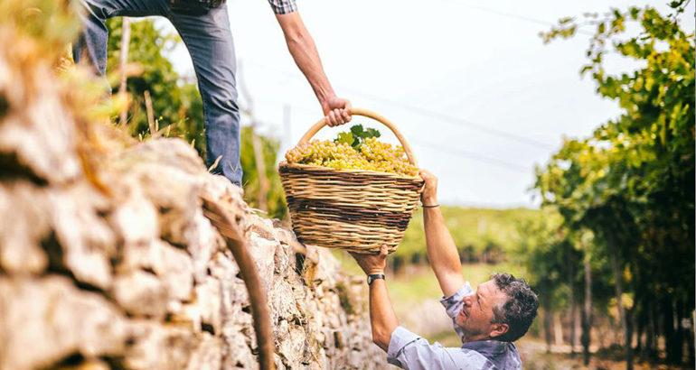 Erkenning voor bijzondere categorie wijngaarden